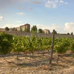 Cata de vinos Castilla y León