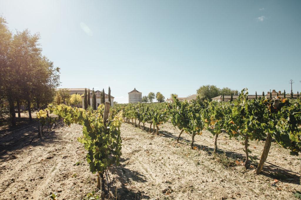 ¿Qué son los vinos de autor?