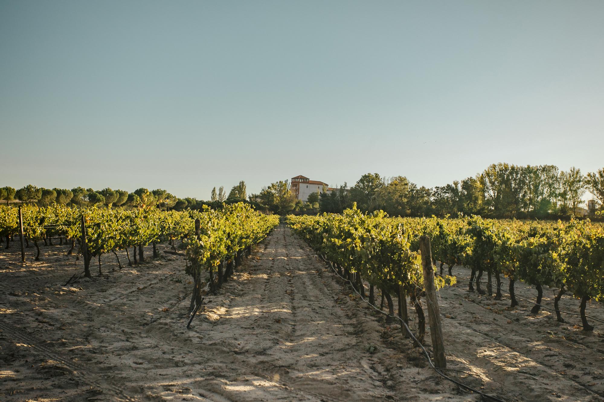 La Mejorada produce vinos bajo la Indicación Geográfica Protegida de Castilla y León